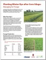 Planting Winter Rye after Corn Silage: Managing for Forage