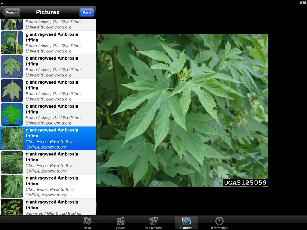 IPM-iPad-Picture