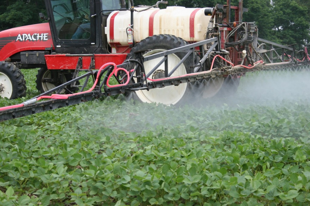Spraying soybean at the R1 crop growth stage