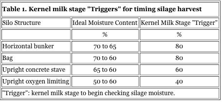 Kernal milk stage %22Tiggers%22