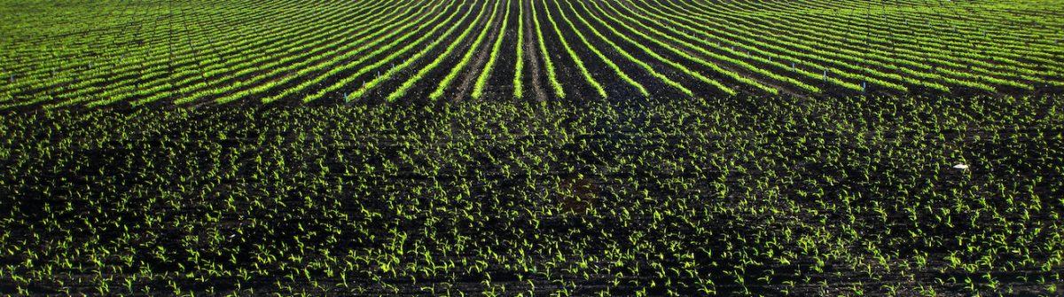 safe rates of seed placed starter fertilizer  u2013 integrated